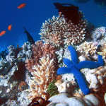 Difference Between Coral and Reef
