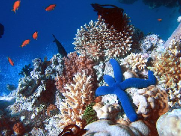 Difference Between Coral Reef