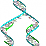 Difference Between DNA Replication