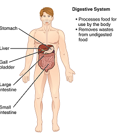 Difference Between Organ and Organelle