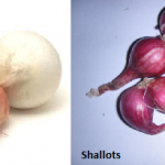 Difference Between Shallots and Onions