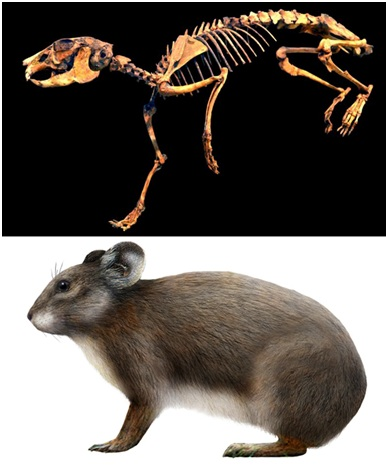 Difference Between Rodents And Lagomorphs Rodents Vs