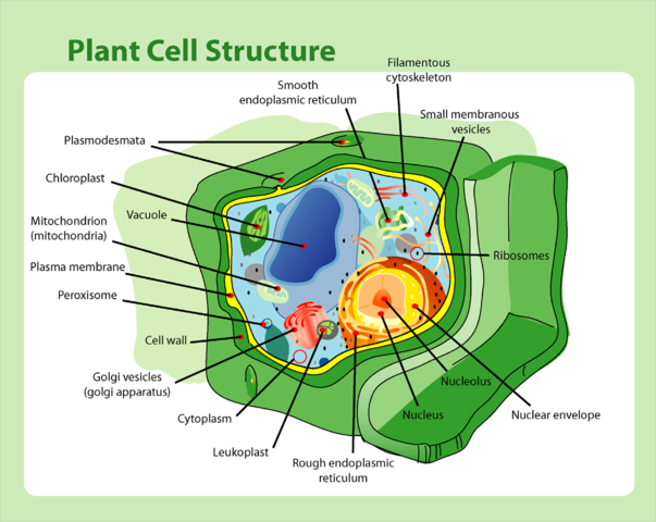 Plant Cell Structure | Difference Between Plant and Animal Cells