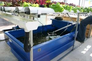 Hydroponics vs Aquaponics