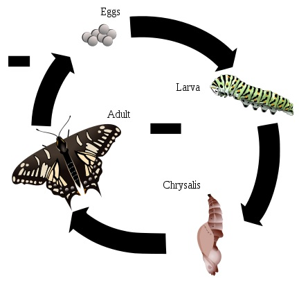 Molting vs Metamorphosis