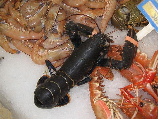 Shellfish vs Crustaceans