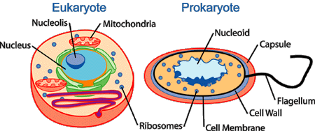 Plant Cell vs Bacterial Cell