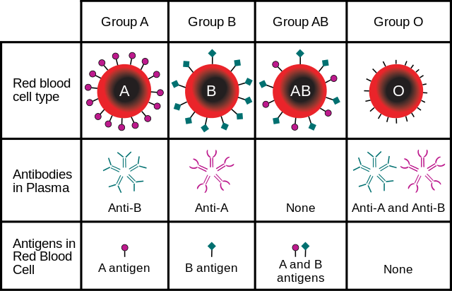 Difference Between Multiple Alleles and Polygenic Traits
