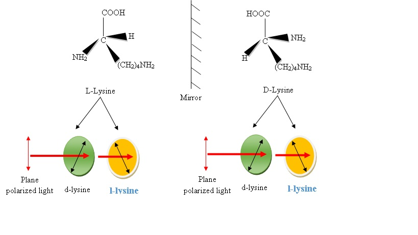 difference between lysine and l-lysine