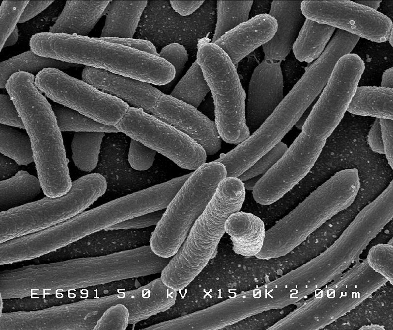 parasite vs. bacteria