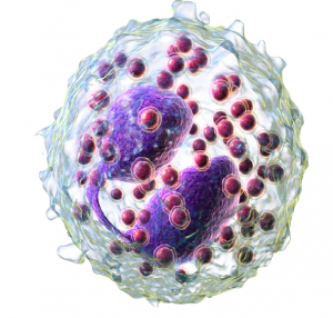 Basophil vs Eosinophil