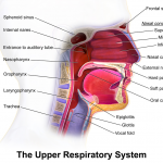 Difference Between Bronchitis and Upper Respiratory Infection