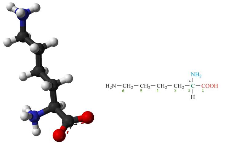 Lysine vs. L-lysine