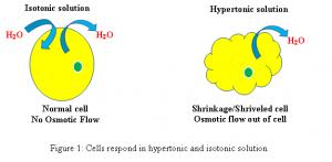 isotonic vs hypertonic-figure 1