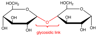 Difference Between Glycosidic Bond and Peptide Bond