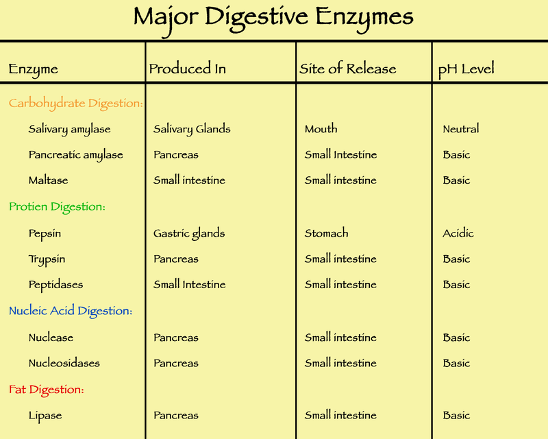 Difference Between Probiotics and Digestive Enzymes | Probiotics ...