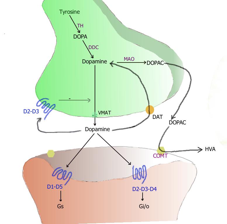Difference Between Neurotransmitter and Neuromodulator