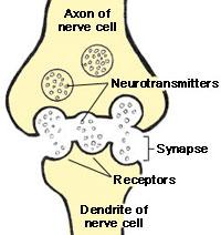 Key Difference - Neurotransmitter vs Neuromodulator