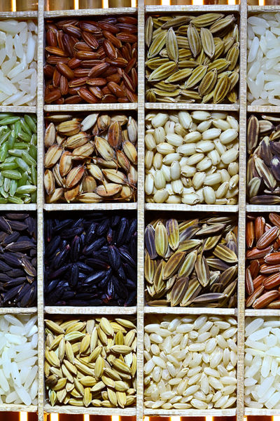 Difference Between HYV Seeds and Traditional Seeds