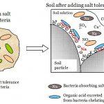 Difference Between In Situ and Ex Situ Bioremediation