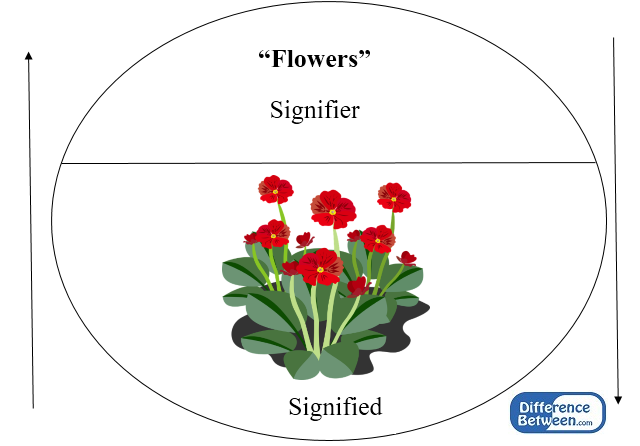 Key Difference - Signifier vs Signified