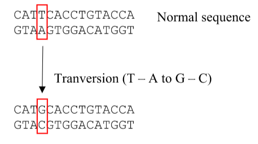 Key Difference - Transition vs Transversion