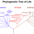 Difference Between Cladogram and Phylogenetic Tree