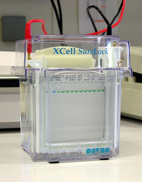 Key Difference - Gel Electrophoresis vs SDS Page