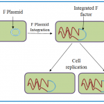 Difference Between Plasmid and Episome
