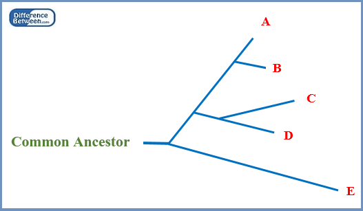 Difference Between Rooted and Unrooted Phylogenetic Tree