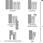 Difference Between Chromosomal Aberration and Gene Mutation