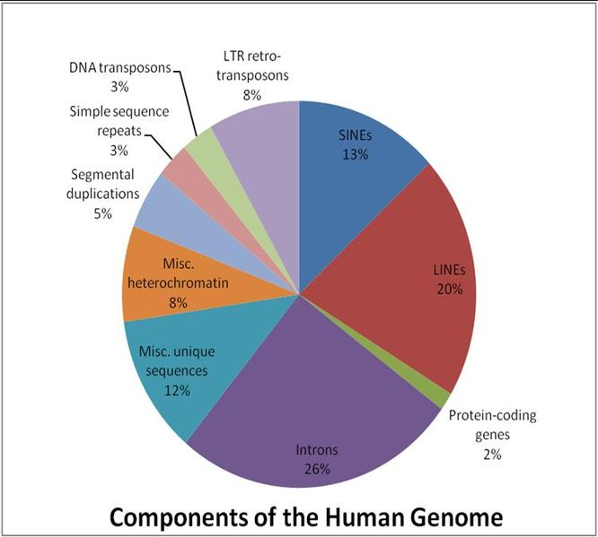 Key Difference -Coding vs Noncoding DNA