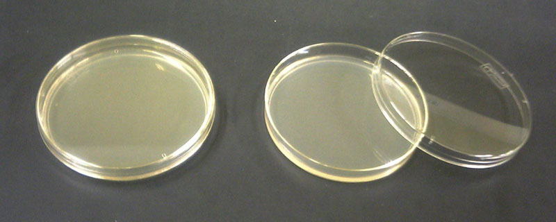 Difference Between Nutrient Agar and Nutrient Broth
