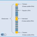 Difference Between Repetitive DNA and Satellite DNA