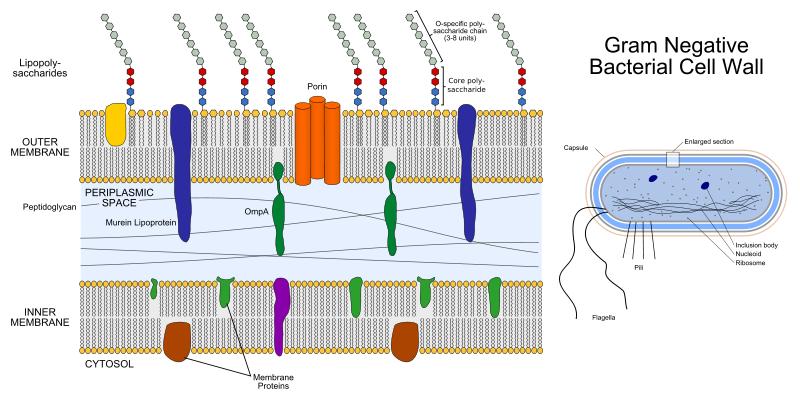 Key Difference - Endotoxin vs Enterotoxin