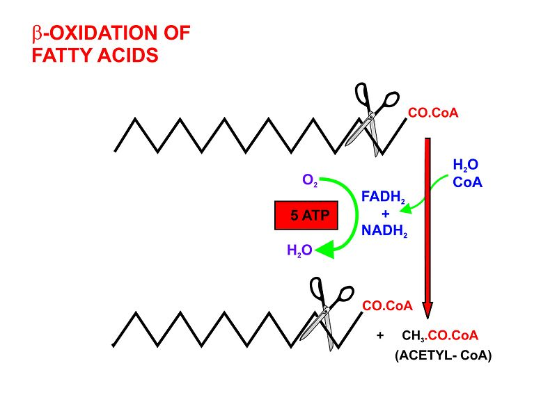 anabolic pathways of biosynthesis
