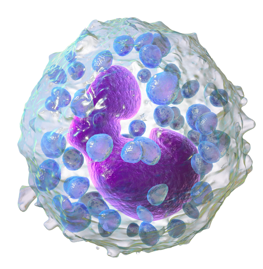 Difference Between Mast Cell and Basophil
