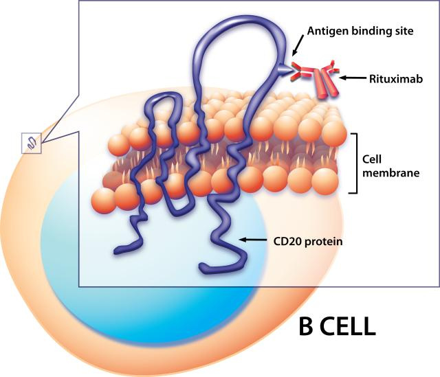 Key Difference - T Cells vs B Cells