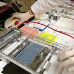 Difference Between Capillary Electrophoresis and Gel Electrophoresis