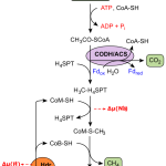 Difference Between Methanogens and Methanotrophs