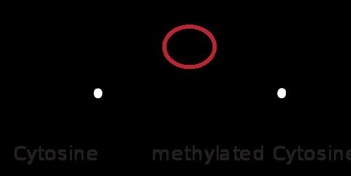 Key Difference - DNA vs Histone Methylation