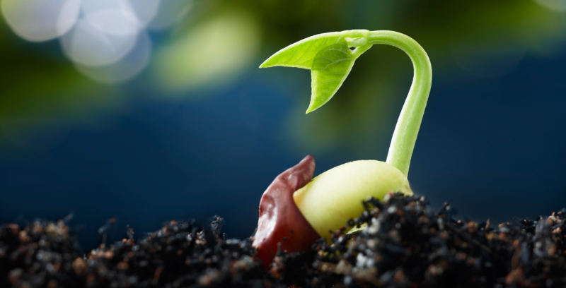 Difference Between Germination and Sprouting