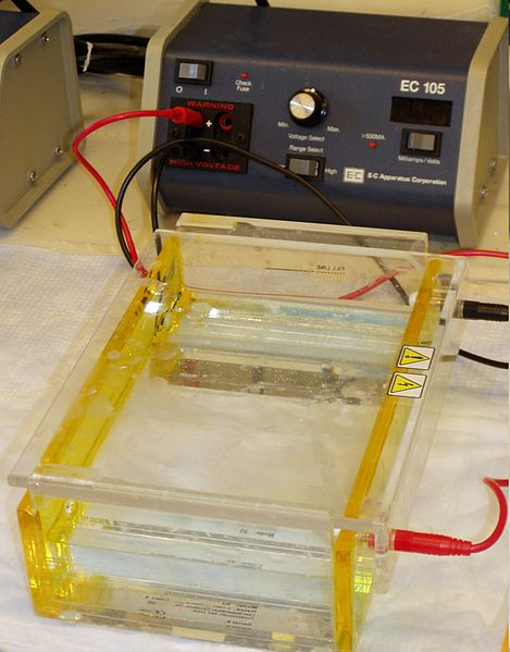Key Difference - Horizontal vs Vertical Gel Electrophoresis