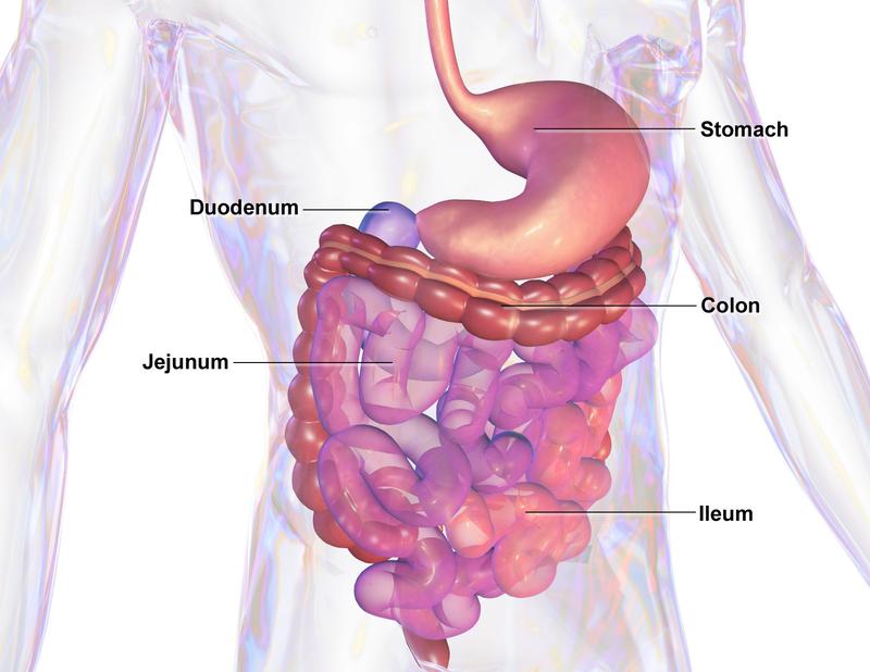 Key Difference - IBS vs Crohn's