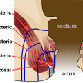 Difference Between Piles and Fistula