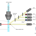 Difference Between Flow Cytometry and FACS