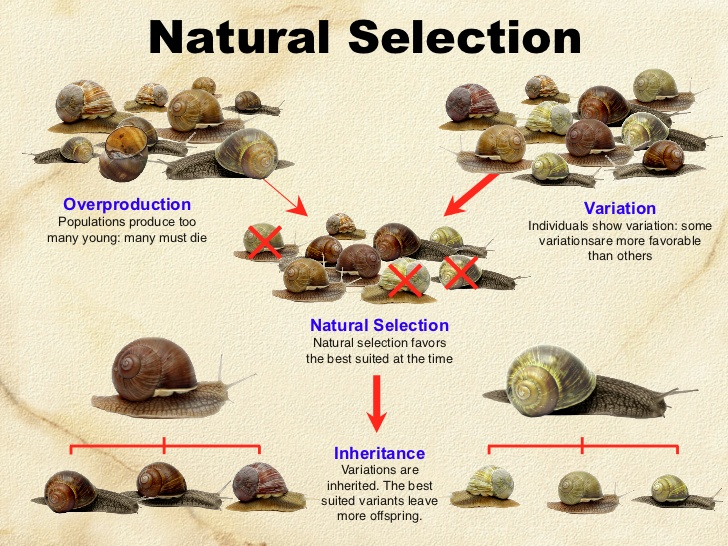 Key Difference Between Lamarckism and Darwinism