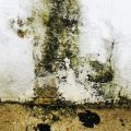 Difference Between Black Mold and Mildew
