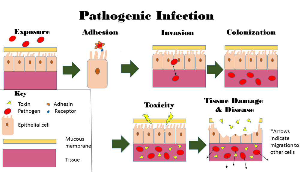 Difference Between Colonization and Infection
