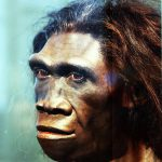 Difference Between Homoerectus and Homosapien